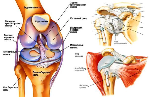 Укрепление суставов исвязок боли, припухлость в мелких суставах анализы крови