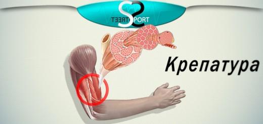 крепатура или почему болят мышцы