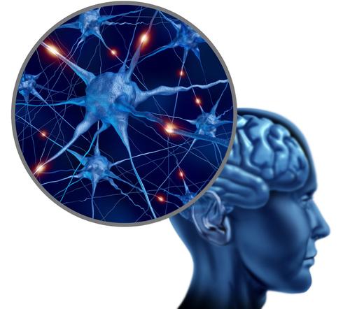 импульсы в мышцы мозг