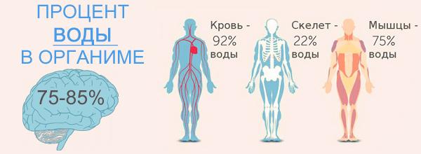 процент-воды-в-организме-человека
